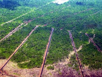 Déforestation sur l'île de Bornéo, afin d'effectuer des plantations pour produire de l'huile de palme